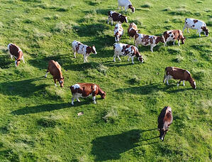 pet-or-cattle